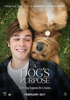 A Dog's Purpose (2017) หมา เป้าหมาย และเด็กชายของผม (ซับไทย)
