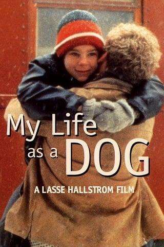 My Life as a Dog (1985) ชีวิตของฉันในฐานะสุนัข